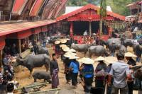 Ceremonia pogrzebowa w Tana Toraja